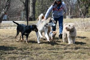 Pet Care - Kennel