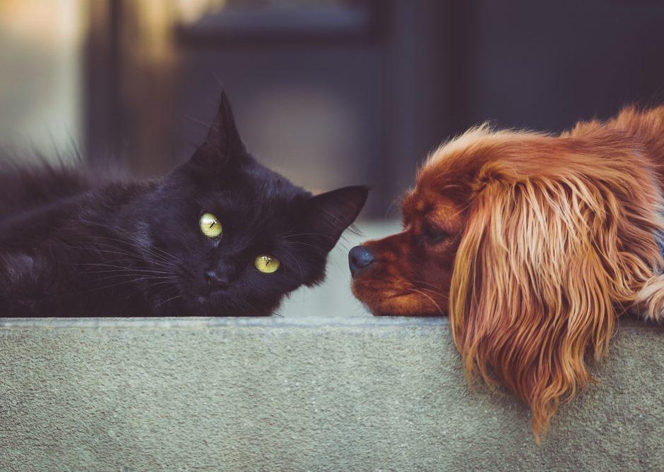 pet friendly stays