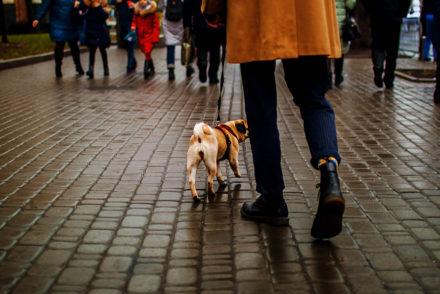 short-term rental pets